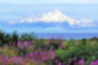 Aroma mountain flowerv2.jpg