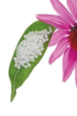 Healing Homeopaths image