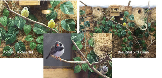 Facilities_Aviary_Birds_Trio.jpg
