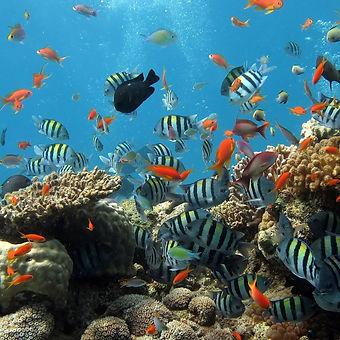 Sea life_edited.jpg