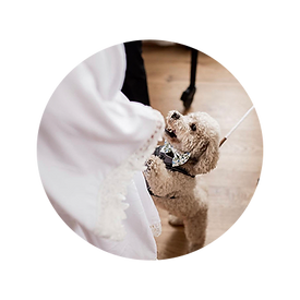 Wedding Pet of Honor