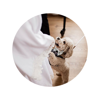 Wedding-pet-sitter