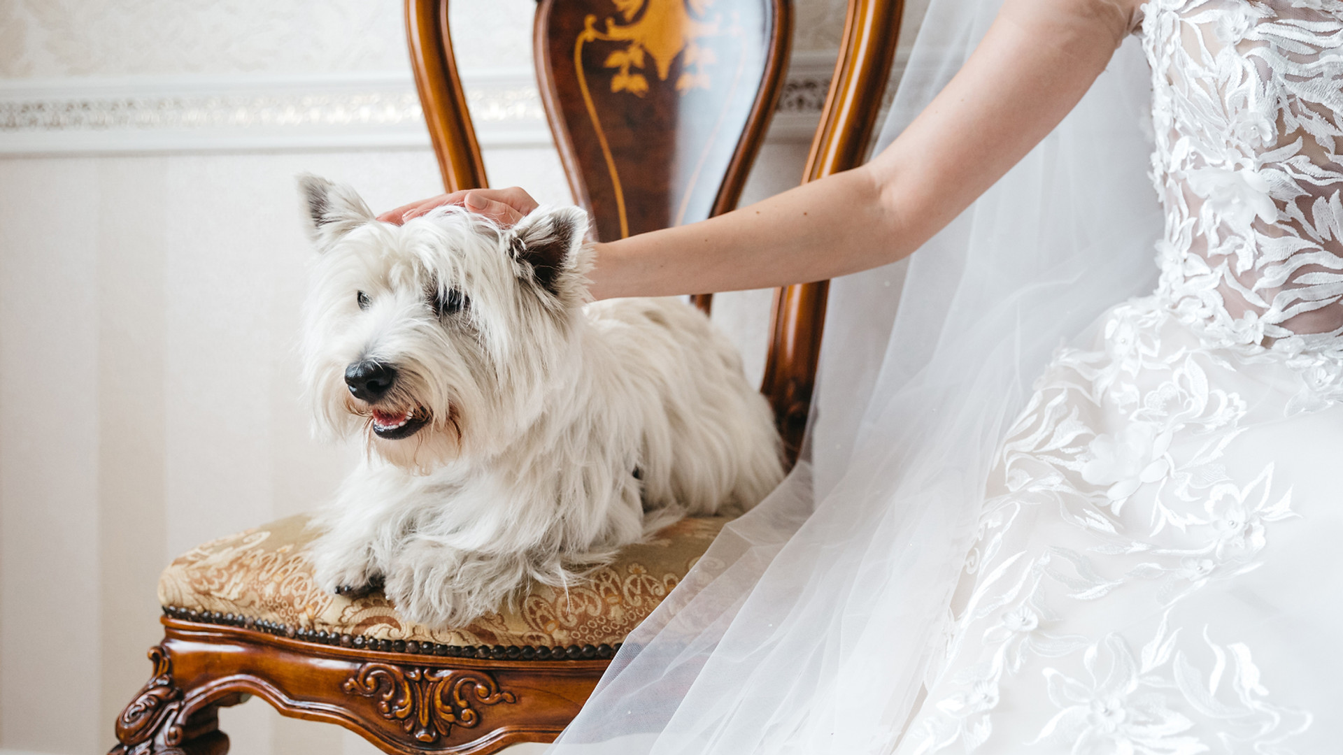 Wedding Pet Services