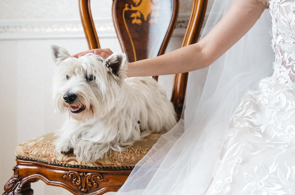 Wedding Pet Services