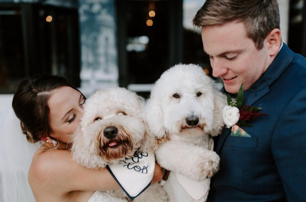 Pet Handling services wedding day