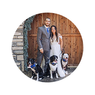 Wedding-pet-handling-service