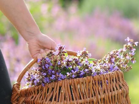 Nouveau !  Formation   :  Plantes aromatiques et médicinales dans le cadre d'une micro-ferme