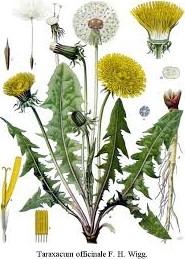 3 avril : Soirée sur les Plantes de la Detox à Préaux