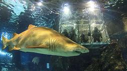 brochure shark.jpg