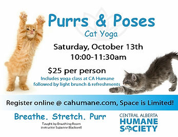 Purrs & Poses Cat Yoga poster-October 13