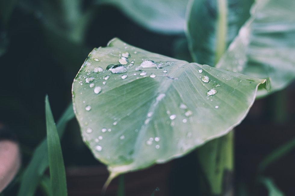 rain-2573488B.jpg