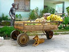 Cuba Travel Adventures Group