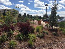 USAA-Xeric Demonstration Gardens.jpg