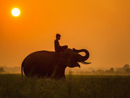 Invoking the Elephant