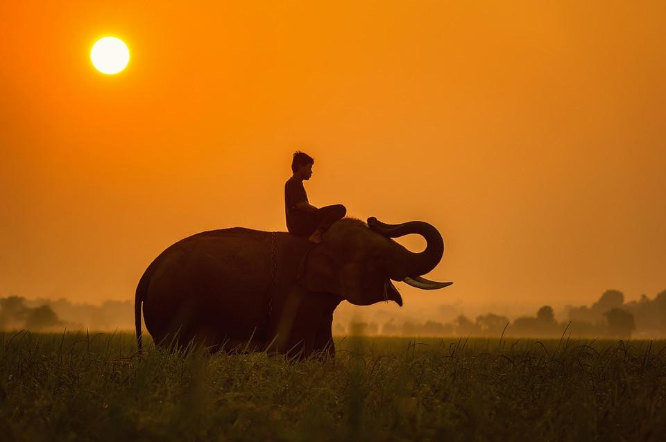 The Wild Healer | Darwin | Reiki | Tarot Card Readings | Animal Healing & Communication