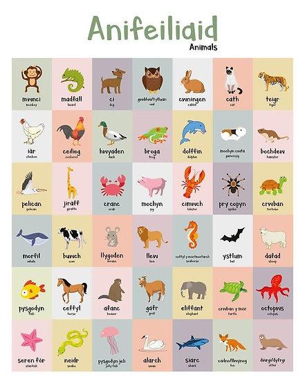 Framed Welsh Vocabulary Prints - A2 Size