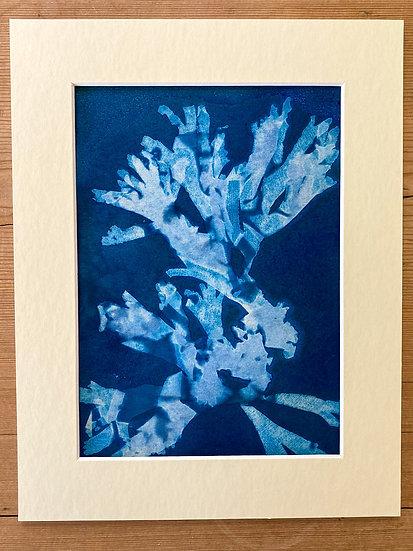 Original Seaweed Cyanotype