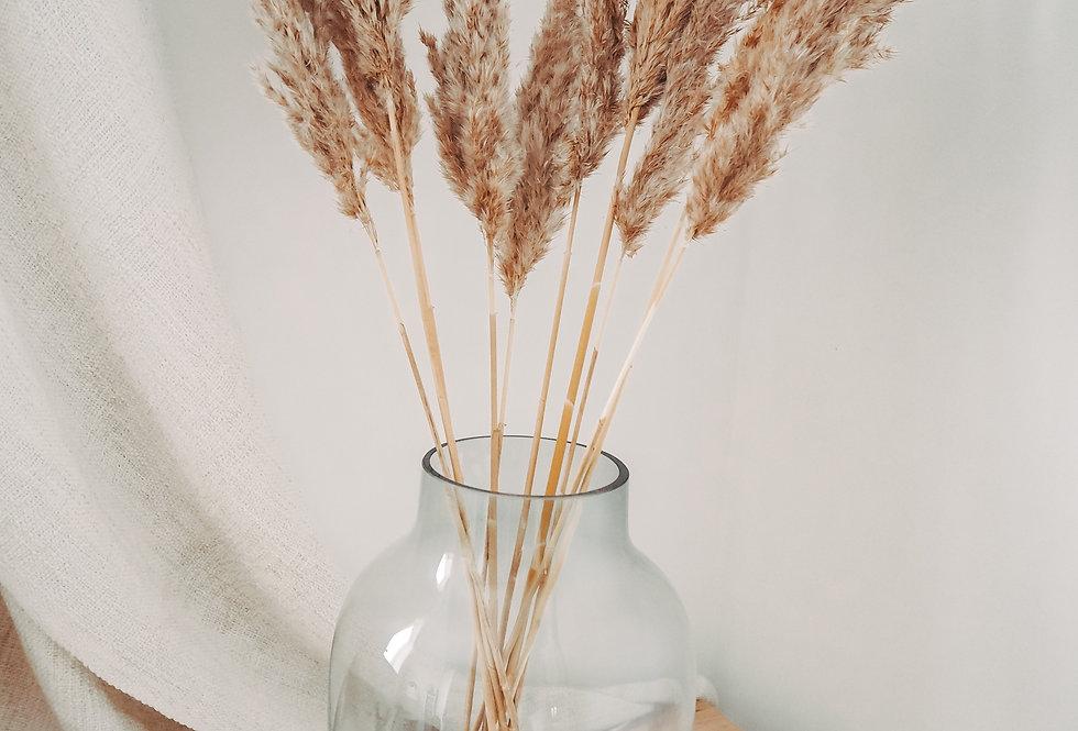 Dried Pampas Grass Bunch - Natural