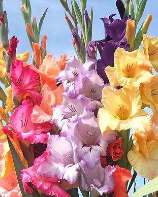 Pastel_Gladiolas_1024x1024.jpg