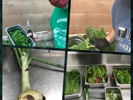 First Harvest of the Garden Ministry