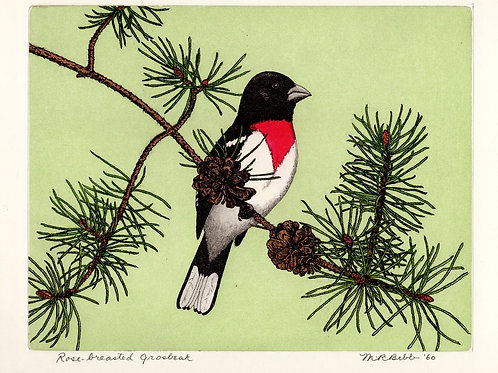 Rose-breasted Grosbeak 1960