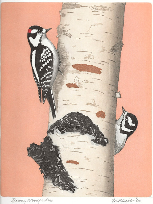 Downy Woodpeckers 1960