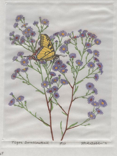 Tiger Swallowtail 1971