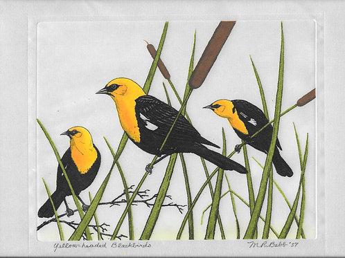 Yellow-headed Blackbirds 1957