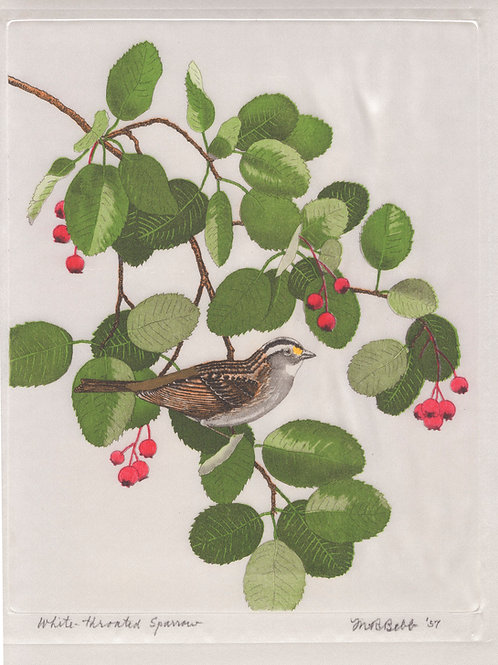 White-throated Sparrow 1957