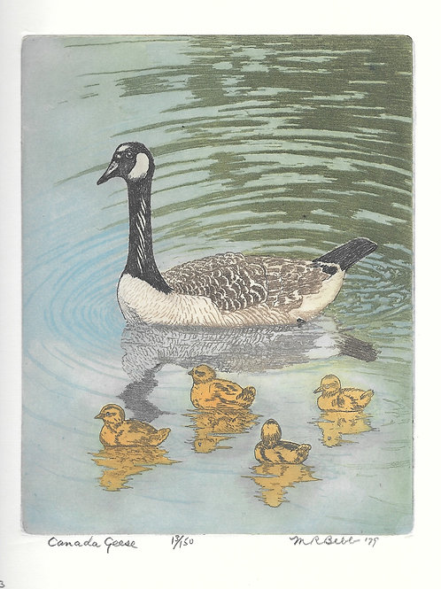 Canada Geese 1979
