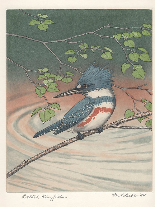 Belted Kingfisher 1954
