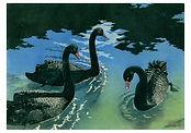 black-swans-notecard-39.jpg