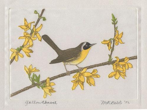 Yellowthroat 1952