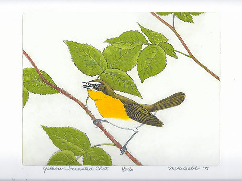 Yellow-breasted Chat 1975