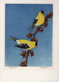 Goldfinches 1950