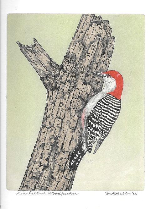 Red-bellied Woodpecker 1966