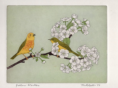 Yellow Warblers 1959