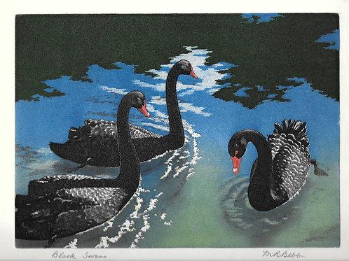 Black Swans no date