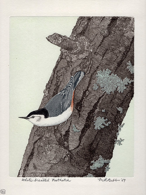 White-breasted Nuthatch 1959