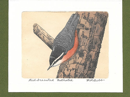 Rose-breasted Nuthatch (no date)