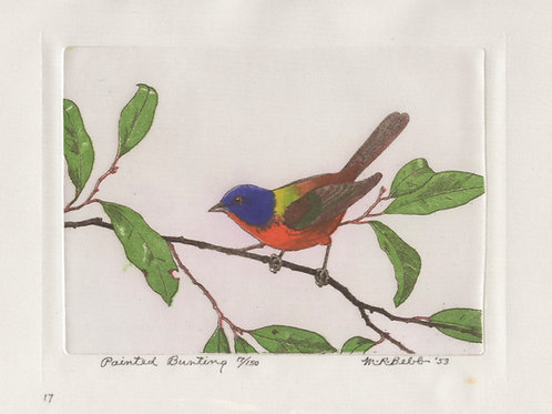 Painted Bunting 1953