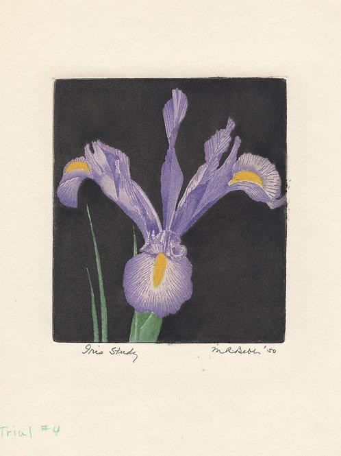 Iris Study (purple) 1950