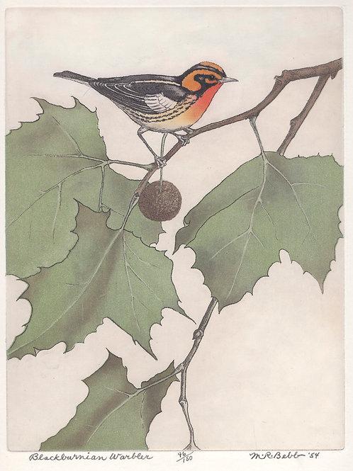 Blackburnian Warbler 1954