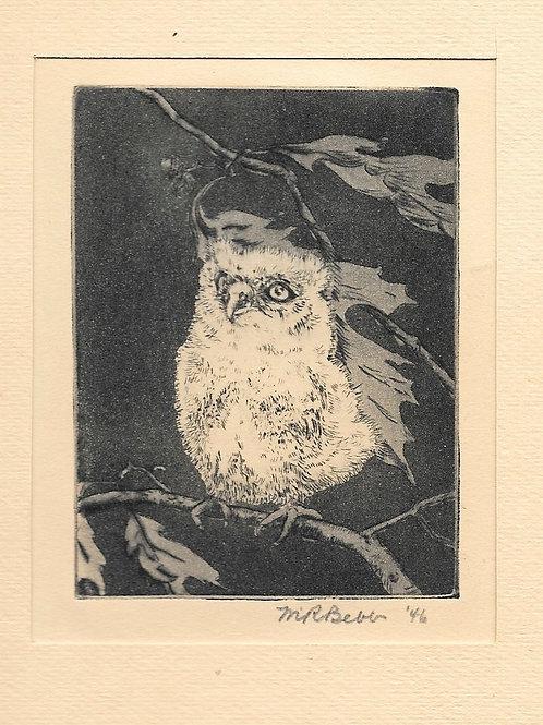 Owlet (Baby Owl) 1946