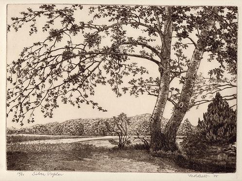 Silver Poplar 1948
