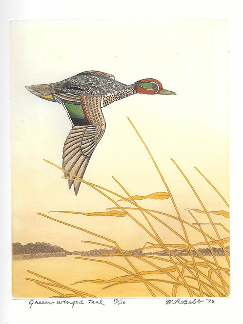 Green-winged Teal 1970