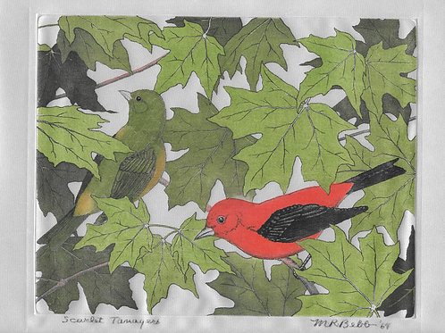 Scarlet Tanagers 1964