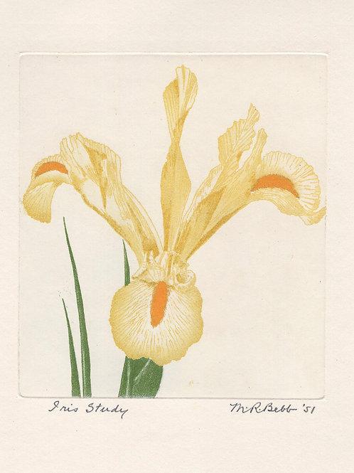 Iris Study (yellow) 1951