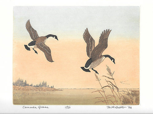 Canada Geese 1966