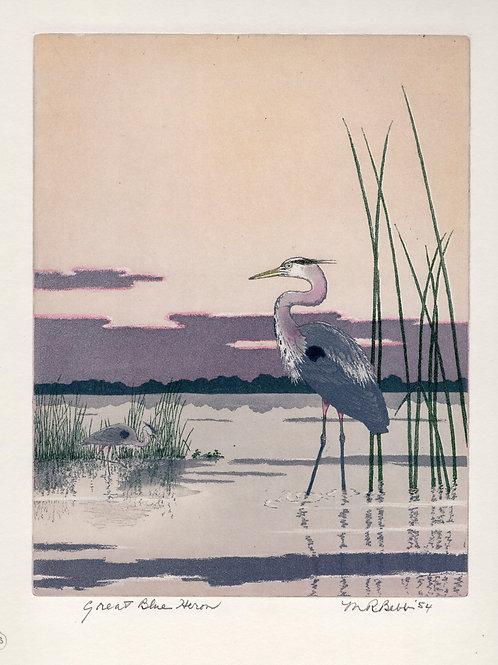 Great Blue Heron 1954